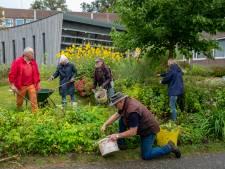 Snoeien aan Oisterwijk 800 zit er na tien jaar op: vrijwilligers dragen border aan gemeente over