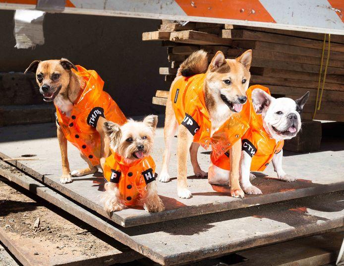 Een campagnebeeld van de samenwerking tussen Very Important Puppies en Heron Preston.