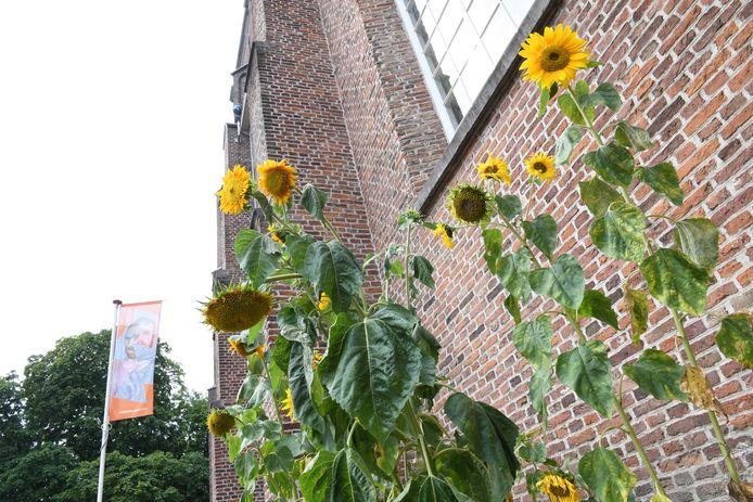 Een Amerikaans filmbedrijf maakte onlangs opnamen in de Van Goghkerk in Etten-Leur voor een internationale educatieve serie over leven en werk van Vincent van Gogh.