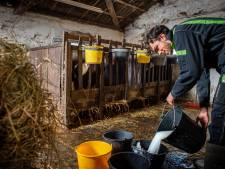 Roest komt tot rust op boerderij: 'Sommige koeien komen bij je staan omdat ze je kennen'
