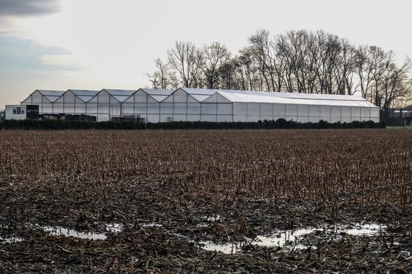 In een waterreservoir onder deze serres kweekte de tuinbouwer 1.500 cannabisplanten.