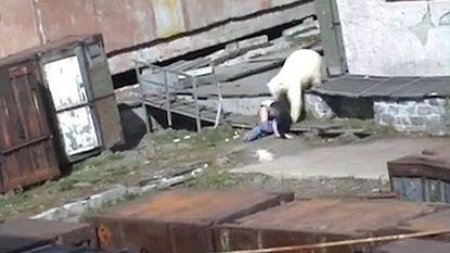 Schokkende beelden: man gooit hond naar ijsbeer om vrouw te redden