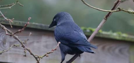 Meer dan 52.000 vogels geteld in Zeeland