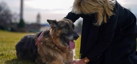 Joe et Jill Biden pleurent la mort de leur berger allemand