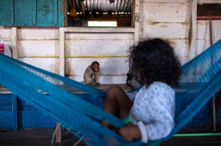 Een kind speelt met een Uakari aapje in Mamirauá Sustainable Development Reserve in de Braziliaanse Amazone. Beeld Hollandse Hoogte / AFP