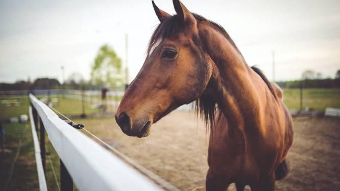"""Manege verbiedt paardrijden voor wie te zwaar is: """"Paard gaat voor"""""""