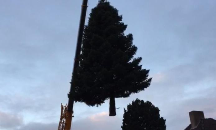De boom wordt uit de tuin in Dinther getakeld.