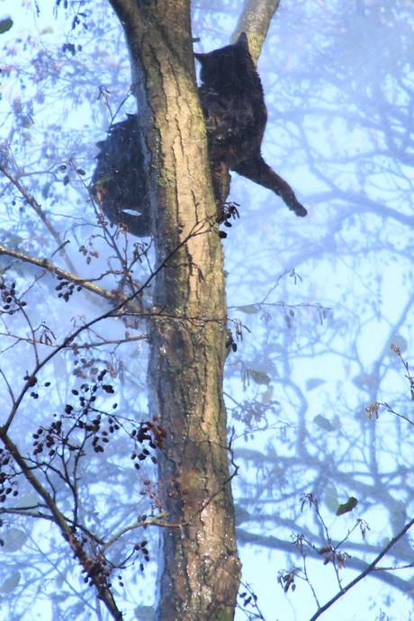 Brandweer spuit kat 'Jochie' uit de boom in Renswoude