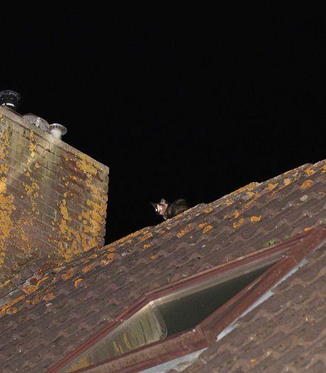 Brandweer moet uitrukken voor bang poesje, beestje vlucht via dak en is spoorloos verdwenen