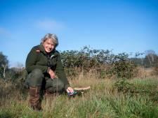 Boswachter Ine is gefascineerd door de paddenstoelen in de Borkeld: 'De belangrijke compostfabriekjes in het bos'