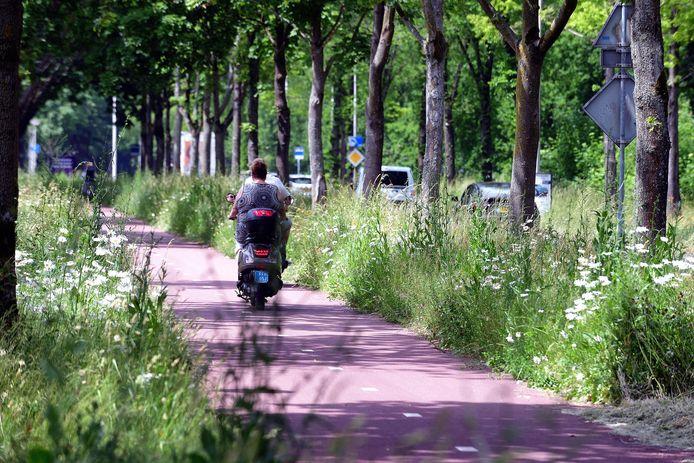 Aan de Dijkrand in Roosendaal staan de bermen soms wel anderhalve meter hoog. Niet iedereen is gelukkig met het nieuwe ecologische maaibeleid van de gemeentes in onze regio.