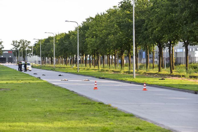 Zeven ganzen doodgereden door politiewagen in Tilburg.