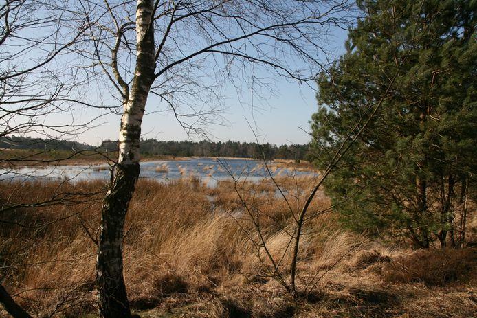 Gerritsflesch nabij Radio Kootwijk is een voorbeeld van kwetsbare natte heidegrond in een Gelders Natura 2000-gebied.
