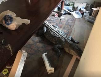 Texaan vindt alligator in zijn overstroomde woonkamer