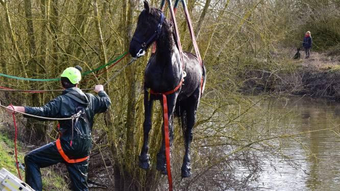 Paard valt tijdens ritje in diepe beek en moet door brandweer op het droge geholpen worden