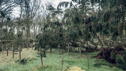 BEELD. Catastrofe aan oud psychiatrisch kerkhof na storm, tientallen bomen tegen de vlakte
