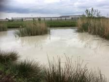 Waterschap adviseert boeren vee niet te laten drinken uit vervuilde sloten in Mastenbroekerpolder