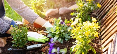Aménagement de jardin: évitez ces 5 erreurs