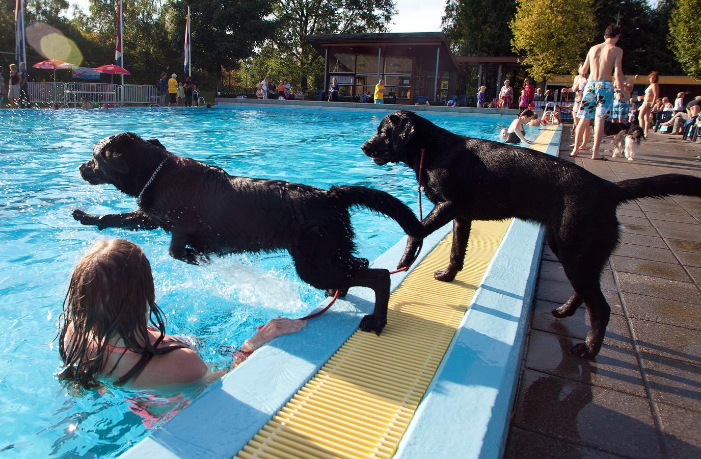 Beeld van een eerdere editie van het hondenzwemmen in De Dolfijn.