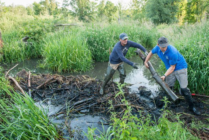 De werken aan de beverdam in de Vijversbeek gebeuren met de grootste omzichtigheid.