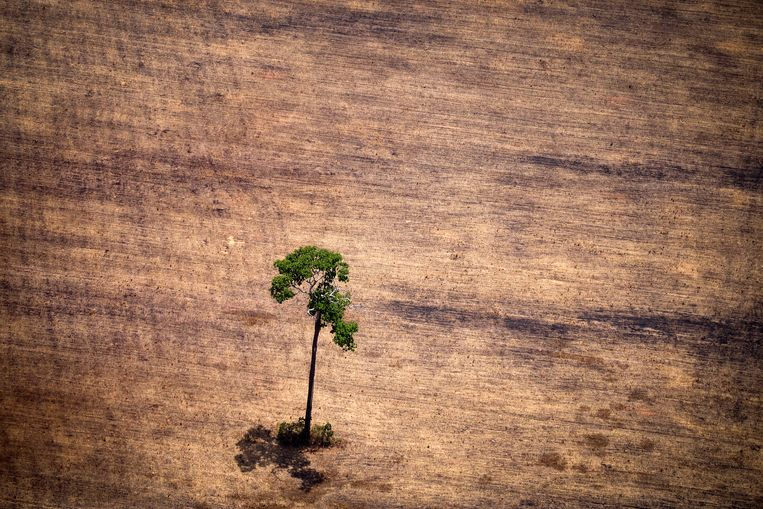 Illegale ontbossing in het Amazone-gebied. Beeld HH / AFP