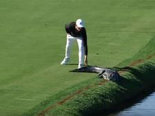 Golfer jaagt krokodil van de baan