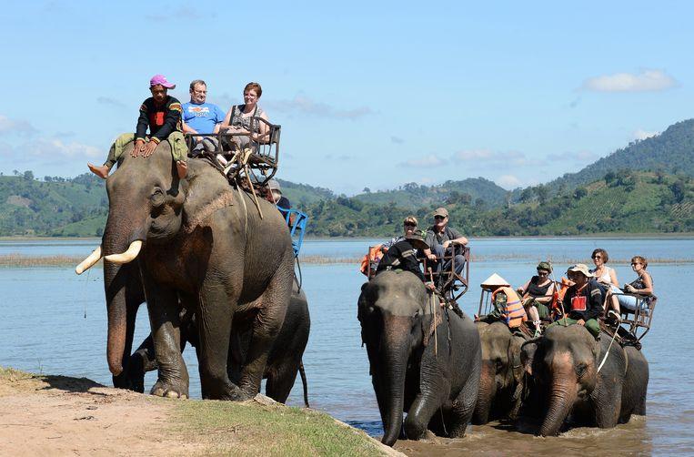 Olifanten halen weinig plezier uit het ronddragen van toeristen en worden regelmatig verwond door de mahouts (de