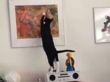 Nancy wordt er gek van en wil antwoord: wie weet waarom haar kat Ans elke dag dit schilderij krabt?