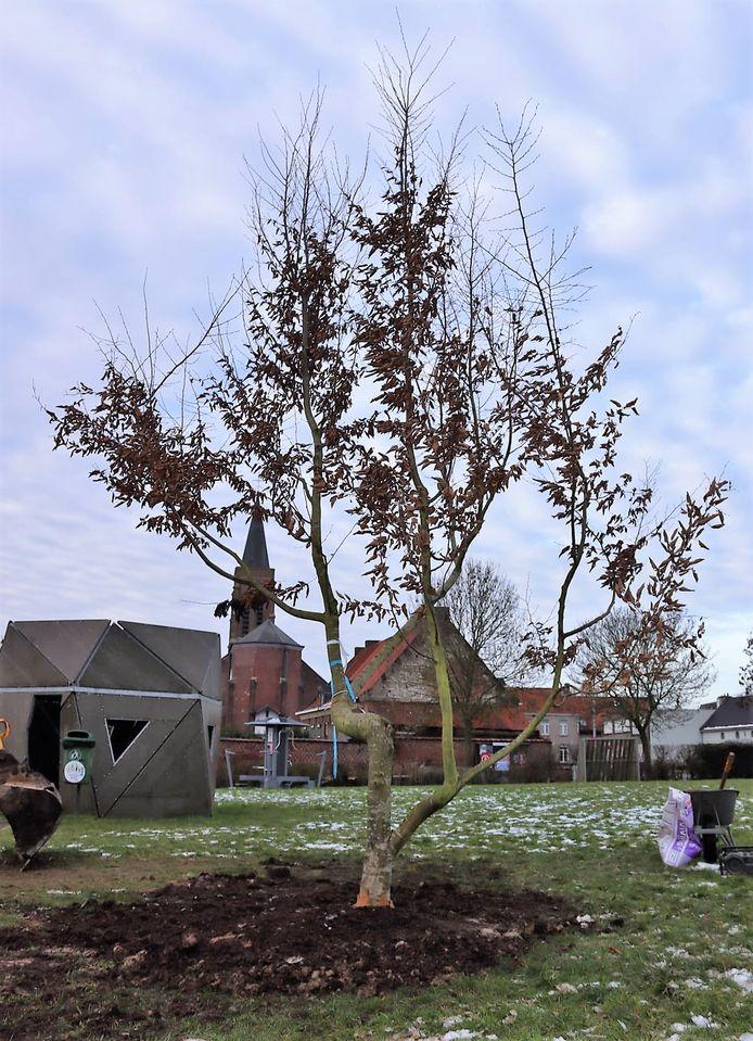 De speelboom staat op 't Pleintje in Kooigem. Op de achtergrond zie je de kerk Sint-Laurentius