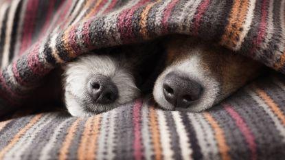 Twee honden in beslag genomen bij vzw wegens gebrekkige huisvesting