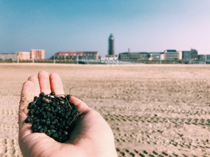 Korrels op strand Scheveningen