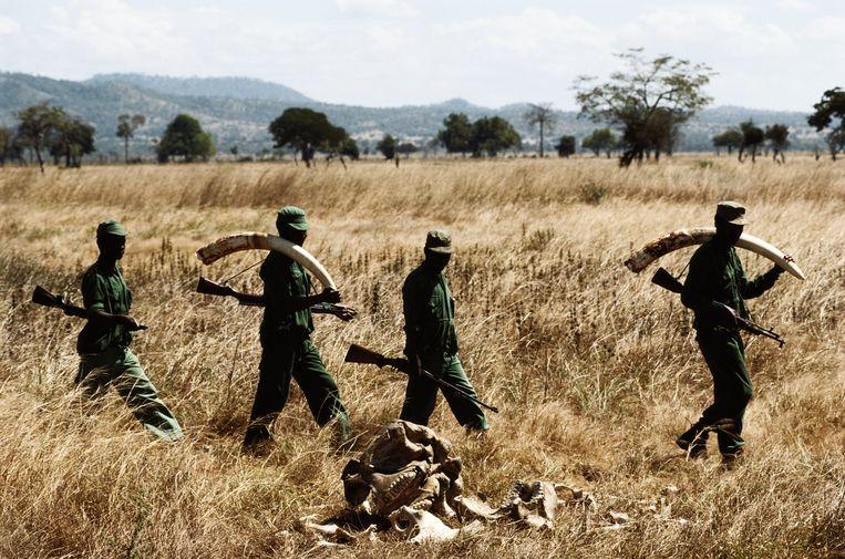 Aanslagen op rangers: 200 natuurbeschermers worden wereldwijd per jaar vermoord.   Beeld Getty Images