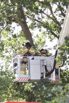 Windvlaag blaast parachutist de boom in in Lunteren