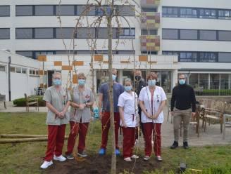 Zorgbedrijf plant Japanse kersenbloesems als herinnering aan Covid-jaar