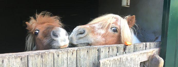 Pony's Sophie en Wilma van De Oude Hofstede.
