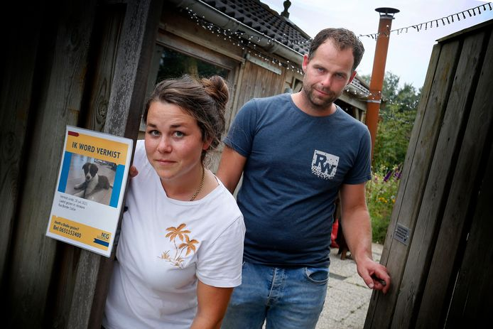 Anne en Bastijn van Breugel zijn al weken op zoek naar hun hondje Bodie. Het teefje verdween eind juli uit de achtertuin.