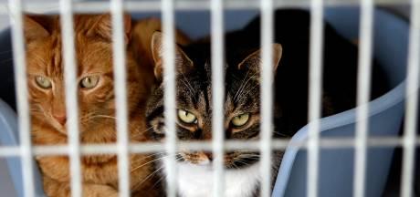 OM eist taakstraf tegen ex-voorzitter Kattenmand voor het in eigen zak steken van tienduizenden euro's