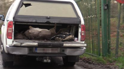 Jagers schieten 15 damherten dood