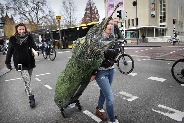 Met een boom op wieltjes op weg naar huis. Beeld Marcel van den Bergh / de Volkskrant