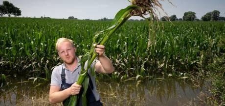 Agrariërs lijden miljoenenschade door hoogwater; gewassen soms vlak voor oogst verloren