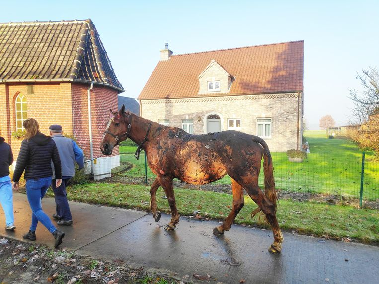Het paard werd overgebracht naar de dierenkliniek in de straat.