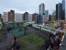 Hoe een verkeerd verstuurd mailtje het einde betekende van een Rotterdamse nieuwbouwwijk