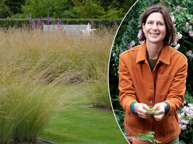 """""""Van te veel voedingsstoffen bloeien grassen net minder"""": zo krijg je de mooiste siergrassen in je tuin"""