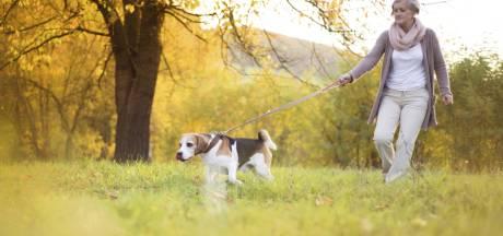 Le chien, remède santé des seniors