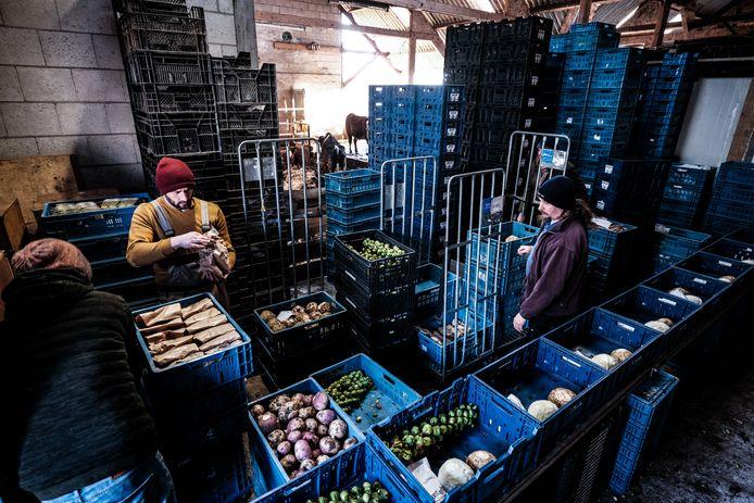 Op de Horsterhof is op maandag alle hulp nodig voor het inpakken van de groentekratjes voor de klanten.