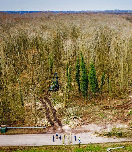Protest tegen kap van meer dan duizend bomen in De Buitenzomerlanden: 'Dit is een heel trieste dag'