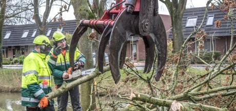 CDA Zwolle wil meer weten over gevolgen grootschalige bomenkap