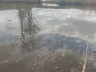 Opnieuw laag olie op Waerevaart, afwachten of vissen het overleven