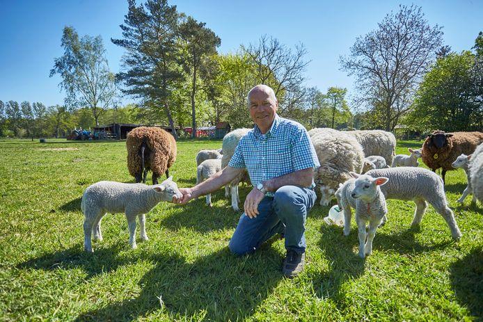Reini Groot Nuelend tussen zijn schapen en lammeren die nog in leven zijn. ,,Na een zoektocht vond ik een van de lammeren in een hoek van ons weiland: dood. De andere vier zijn weg, vermoedelijk meegenomen door een wolf.''