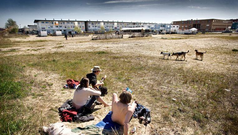 Archieffoto van de Houthavens. Op de achtergrond het gebouw van het 4de gymnasium. Foto Klaas Fopma Beeld